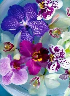 The Ghost Orchid & Exotic Orchids| Serafini Amelia | Purple and Blue Hues Orchids Arrangment in a Bowl