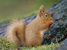 Squirrels | Funny Squirrels wallpaper for desktop |Funny Animal
