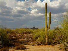 Scottsdale Monsoon Clouds in the high desert by Scottsdaleisms, via Flickr