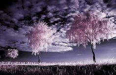 infrared photography -
