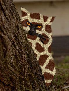 Genetisch Gemodificeerde Kat of Giraffe-Kat