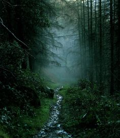 "lotrscenery: "" The Old Forest - Rostrevor Forest, Ireland """