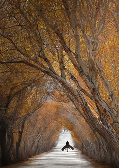 Xinjiang, China (I want to live at the end of that road.)