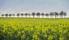 Air of #Spring:  Un campo, 11 aprile 2014. (ODD ANDERSEN/AFP/Getty Image ) La #primavera fotografata - Il Post