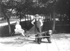 Vintage Photos of Dogs Pulling Carts | sweet juniper inspiration