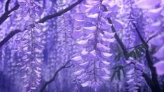 Animation from Demon Slayer Aesthetic Images, Flower Aesthetic, Purple Aesthetic, Aesthetic Anime, Aesthetic Wallpapers, Film Aesthetic, Aesthetic Videos, Retro Aesthetic, Aesthetic Grunge