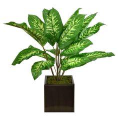 3ASRT PLANT SQR ZNC PLNTR 24H