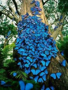 Amazon Rain Forest in Brazil with Blue Butterflies