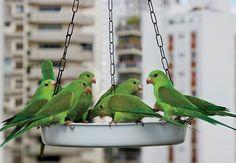 Comedouro Para Pássaros.
