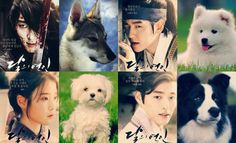 These 13 Scarlet Heart: Ryeo puppy look-a-likes are sure to brighten you day!