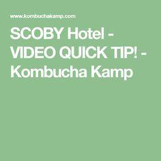 SCOBY Hotel - VIDEO QUICK TIP! - Kombucha Kamp