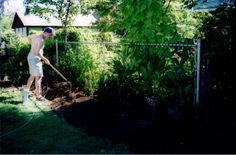 Planting yews and Goldflame spirea across the back August Photo courtesy of the homeowner. Starting A Garden, Planting, Weed, Grass, York, Outdoor Decor, Plants, Marijuana Plants