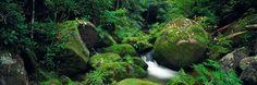 Mossy Boulders by Peter Lik