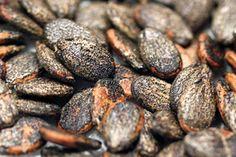 арбузные семечки