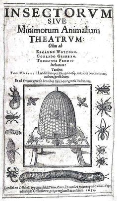 Illustration of medieval bees and apiary