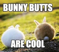 Bunny butts are cool! Share if you agree. #RT #rabbit #bunny #bunnies #pets #cuteanimals