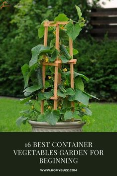 16 Best Container Vegetables Garden for Beginning - HomyBuzz #homybuzz #gardening #fall #halloween #outdoordecorating Growing Vegetables In Containers, Easy Vegetables To Grow, Home Grown Vegetables, Container Gardening Vegetables, Planting Vegetables, Perennial Vegetables, Fresh Vegetables, Raised Vegetable Gardens, Vegetable Garden Design