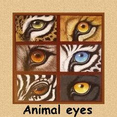 Animal eyes in art Animal Paintings, Animal Drawings, Art Drawings, Arte Elemental, Color Pencil Art, Eye Art, Wildlife Art, Art Plastique, Elementary Art