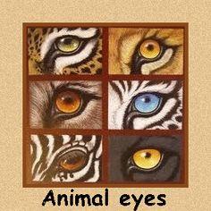 Animal eyes in art Animal Paintings, Animal Drawings, Art Drawings, Arte Elemental, Behind Blue Eyes, Color Pencil Art, Eye Art, Wildlife Art, Art Plastique
