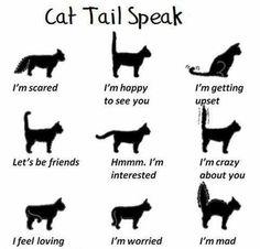 Cats' tail language! :)