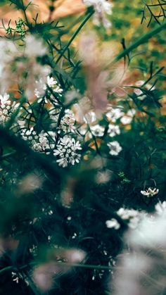 In Guido Gonzalez's photo our eyes are drawn deep into the centre of this shrub and at the delicate white petals.  Notice, the out of focus flowers in the foreground? Excellent focus control.