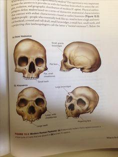 Skull Anatomy, Movie Posters, Art, Art Background, Film Poster, Kunst, Performing Arts, Billboard, Film Posters