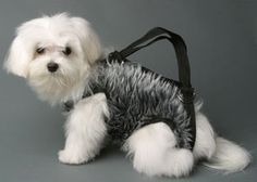 dogpurse by Extreme Craft. This seems just wrong.