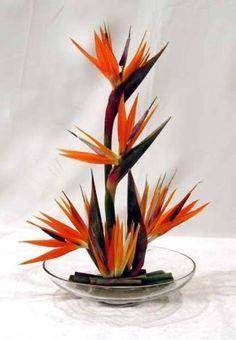 Image result for arreglo floral en abanico con ave del paraiso