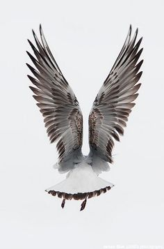 Seagull flight