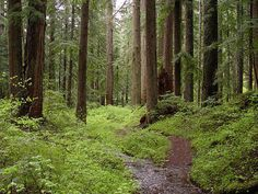 File:Creek and old-growth forest-Larch Mountain.jpg