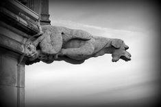 gargouille, notre dame, cathédrale, église, monstre, gouttière, esméralda, Paris, moyen âge, architecture, sorcellerie, superstition, chimère