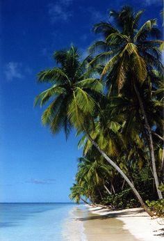 Paradise beach on Tobago