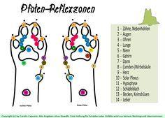 Neuer Blog-Artikel: Pfoten-Reflexzonen