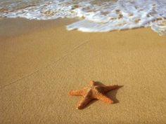 Starfish, Starfish