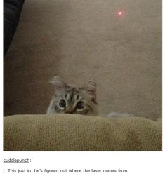 Animals on tumblr - Imgur  Cute and hilarious
