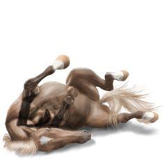 Wicher, koń wierzchowy Nokota Dereszowata #7915864 - Howrse