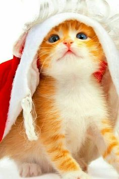 Look it's Santa Claws!