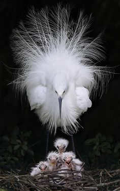 Bird & Babies - Awesome Shot !