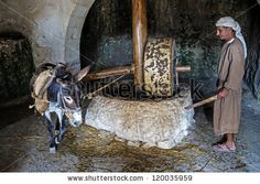 NAZARETH, ISRAEL - OCT 15 : Millstone & donkey used for pressing olives to make olive oil in October 15 2012 at Nazareth Village, a historical re-creation of Nazareth as it was at the time of Christ