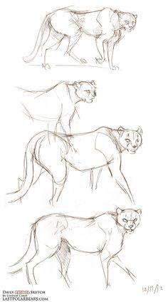 Daily Animal Sketch – Cheetahs – Last of the Polar Bears Animal Sketches, Animal Drawings, My Drawings, Body Sketches, Art Sketches, Drawing Poses, Painting & Drawing, Cheetah Drawing, Bear Sketch