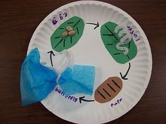 like the idea of using a round surface to do any life cycle activity. or do on rectangular surface then roll into cylinder.     Can use pom poms to show caterpillar. Or tissue paper