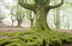 Bosques de Hayas, Trespaderne by pedro javier pascual hernandez, via 500px