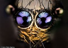 'We're ready for our close ups': Wildlife photographer gives ugliest of insects the star treatment with 'macro' portraits | Mail Online Nicholas Reusens-photographer dailymail.co.uk