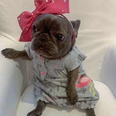 This Store for Frenchie Lovers who want to order T Shirt, Hoodie, Tanktop, Mug, Pillow. about french bulldog. All our Innovative designs and excellent quality which will make you happier with your dog. French Bulldog Clothes, Cute French Bulldog, French Bulldog Puppies, Baby Puppies, Cute Puppies, Cute Dogs, Dogs And Puppies, French Bulldogs, Doggies