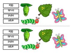 """FREE SCIENCE LESSON - """"Insect Freebie"""" - Go to The Best of Teacher Entrepreneurs for this and hundreds of free lessons.  PreKindergarten - 2nd Grade  #FreeLesson  #Science  http://www.thebestofteacherentrepreneurs.net/2014/11/free-science-lesson-insect-freebie.html"""