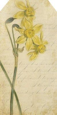 Daffodil tag