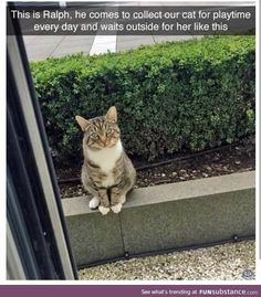 25 Funny Animal Pictures Of The Day 25 lustige Tierbilder des Tages – lustige Tiere – täglich LOL Pics Funny Animal Memes, Funny Animal Pictures, Cute Funny Animals, Cat Memes, Cute Baby Animals, Funny Cute, Animals And Pets, Cute Cats, Funny Memes
