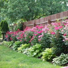 wish this is what my flowers look like in front of my fence.