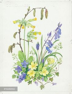 Bluebells, violets, primroses, cowslips and catkins Watercolor And Ink, Watercolor Flowers, Watercolor Paintings, Botanical Art, Botanical Illustration, Illustration Art, Nature Sketch, Pressed Flower Art, Fabric Painting