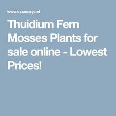 Thuidium Fern Mosses Plants for sale online - Lowest Prices!